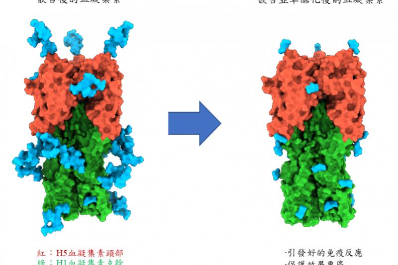 中研院研發出A型流感廣效疫苗,可對抗異株亞型A流病毒。(取自中研院官網)