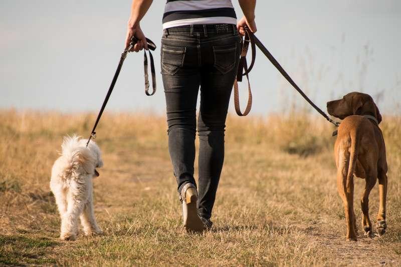 德國新法強制規定,飼主未來每天必須遛狗2次(取自Pixabay)