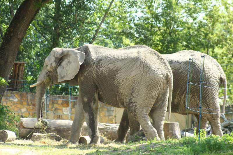 華沙動物園母象在夥伴過世後行為異常,園方計畫用大麻二酚減緩其焦慮。(Warszawskie ZOO臉書)
