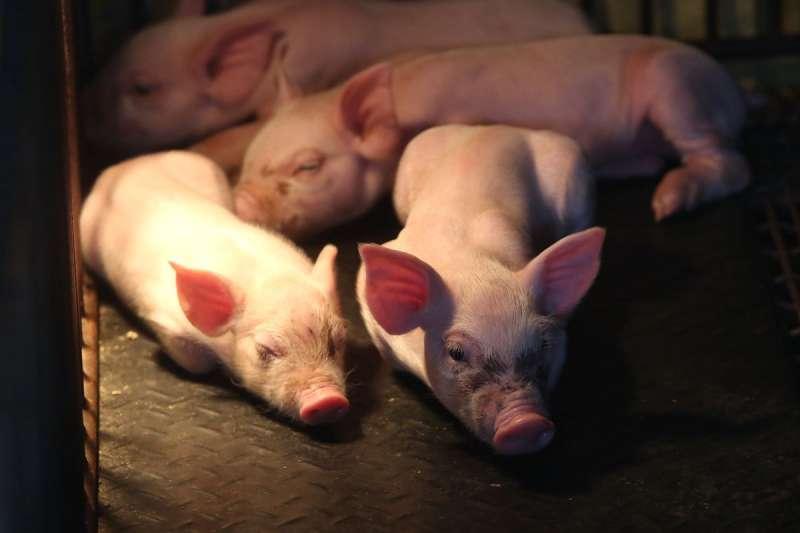 近日有民眾指出,4日有超過108公噸的美豬進口,但食藥署儀表板網站卻仍掛零。示意圖。(資料照,美聯社)