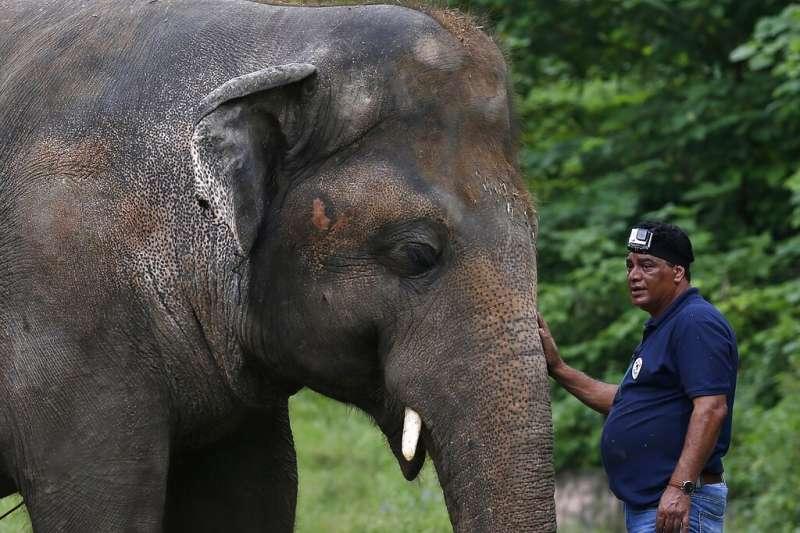 被稱為「全世界最寂寞」大象的亞洲象卡萬(Kaavan),被允許離開巴基斯坦動物園的惡劣環境,赴他國展開新生活。(AP)