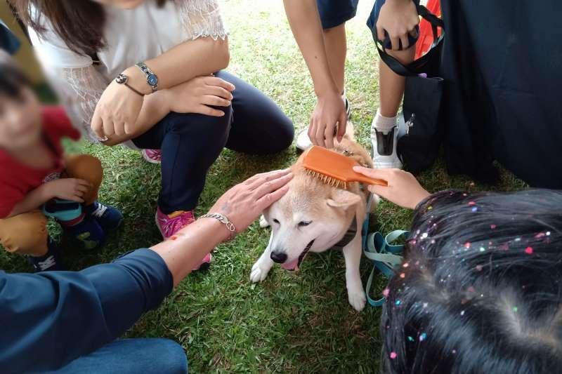 阿里巴巴集團攜手台灣狗醫生協會,一起宣揚愛護動物理念。(阿里巴巴集團提供)