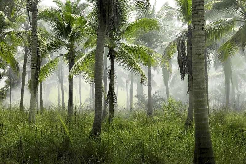 砍伐棕梠樹造成環境破壞,到底該不該抵制棕梠油?(示意圖/ M71@pixabay)
