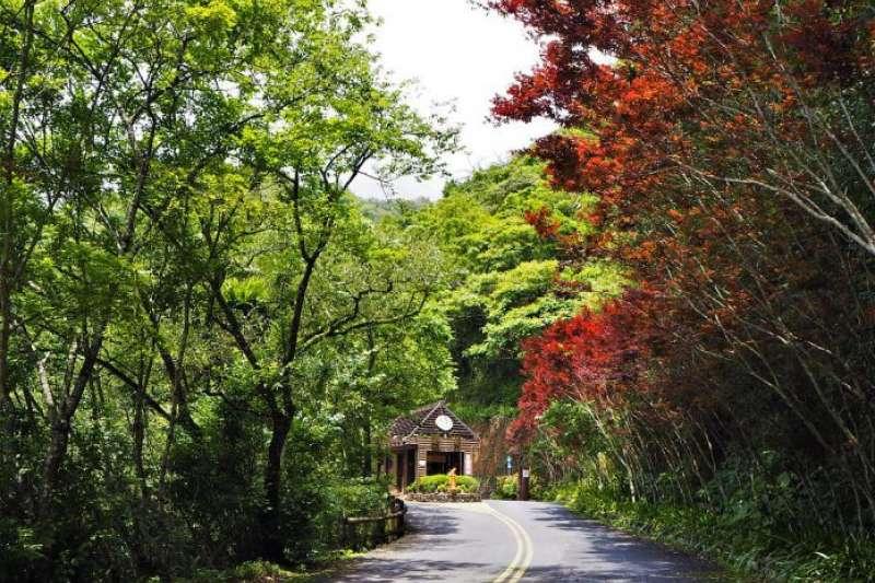 宜蘭太平山周邊景點-棲蘭神木園。(圖/Tripbaa趣吧!亞洲自由行專家)
