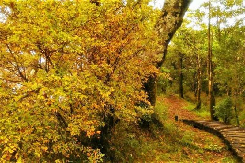 宜蘭太平山景點-宜蘭太平山山毛櫸。(圖/Tripbaa趣吧!亞洲自由行專家)