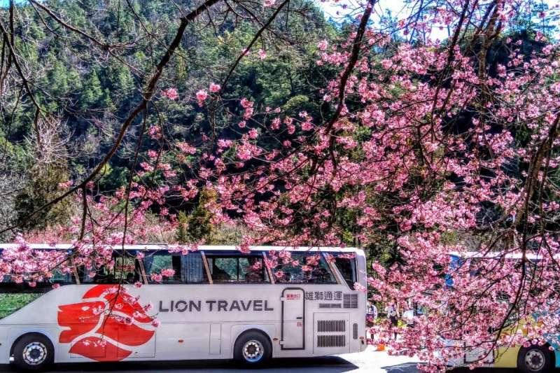 搶攻國旅市場,雄獅通運15起徵巴士司機50名,起薪4萬至7萬元以上。(雄獅提供)