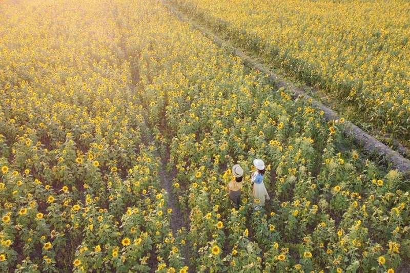 向日葵花季已經來臨,快到這10個景點看看美麗的向日葵,充飽正能量吧!(圖/chih_hung_hsiao, Instagram)