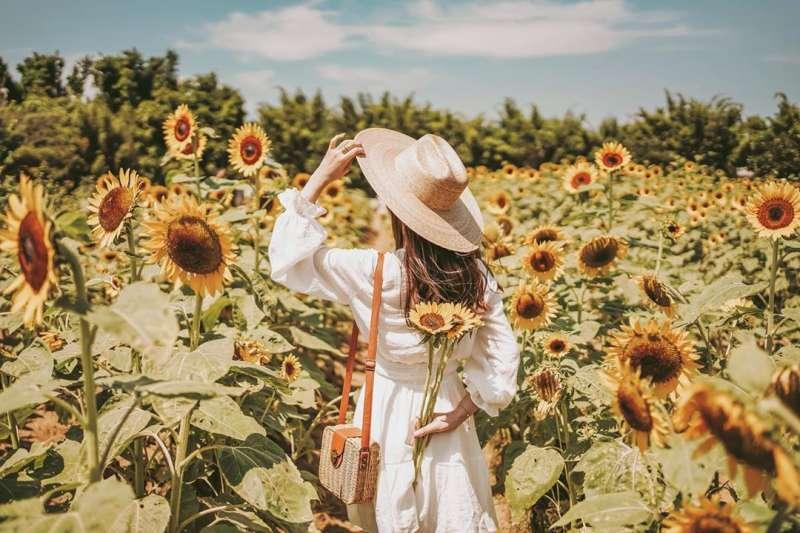 向日葵花海景點推薦-向陽農場。 (圖/duffy_lifediary, Instagram)