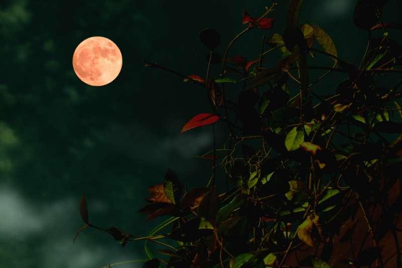 中秋節的英文是 Mid-Autumn Festival,也可以說是 Moon Festival。(圖/取自photoAC)