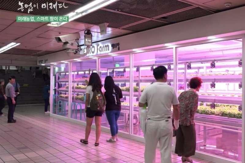 位於韓國首爾上島捷運站的Metro Farm,常有路人經過因好奇駐足圍觀。(圖/食力foodNEXT提供)