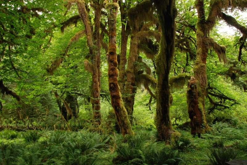 英國皇家植物園最新研究指出,全球4成植物物種面臨滅絕危機(取自Pixabay)
