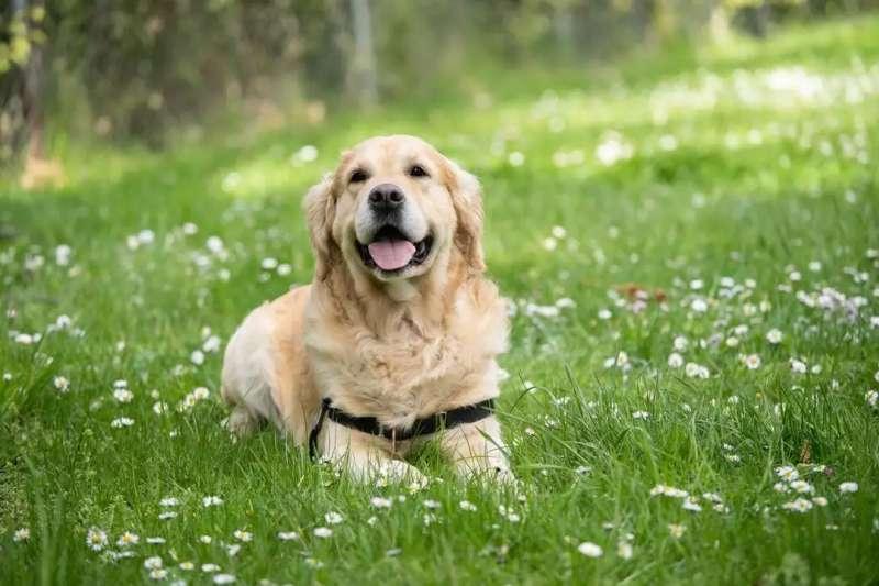 你知道狗狗的年齡該怎麼算嗎?(圖/科技報橘提供)