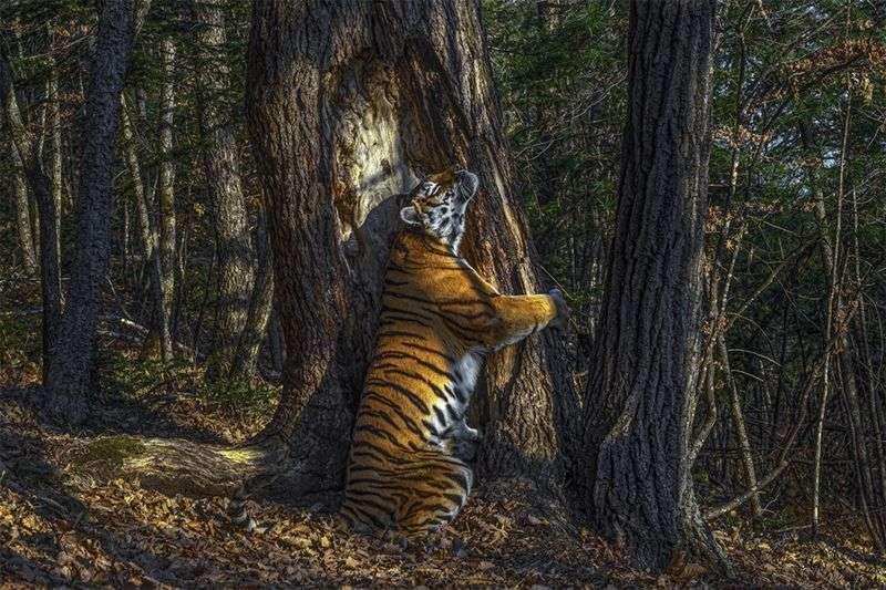 俄國攝影師戈什科夫(Sergey Gorshkov)的作品《擁抱》。(BBC News中文)