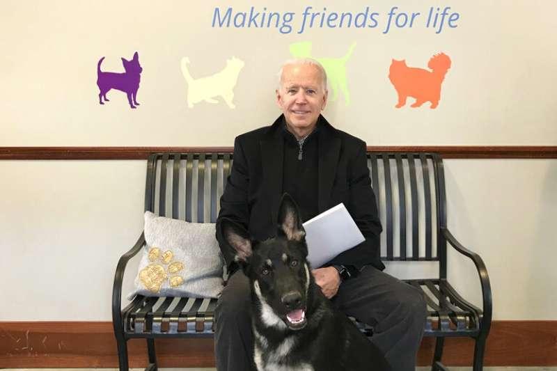 美國總統拜登與他的狗狗Major。(美聯社)