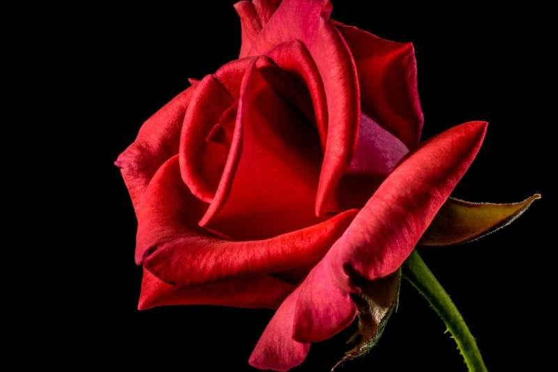 花,看來好像是具備生命的象徵,事實上,加在女人身上的符號,常是脫離泥土無根的花朵,只具備花的表象,而不具備植物野性的生命力。(示意圖,Josch13@pixabay)