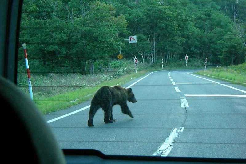 日本鄉鎮近幾個月「野熊出沒」事件頻繁,瀧川市為此設置2台「機器野狼」以嚇阻野熊。(by Hajime NAKANO@flickr / CC BY 2.0)