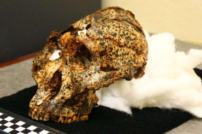 在南非發現的一個200萬年前的頭骨為人類進化提供了更多資訊。(BBC News中文)
