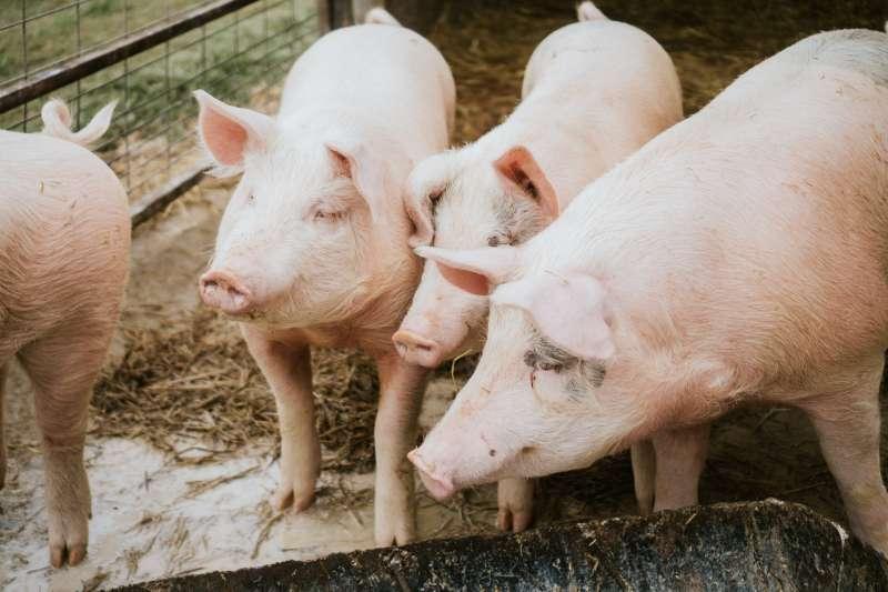 進口水泥竟然和萊豬議題有不可思議的相似之處…(圖/綠學院提供)