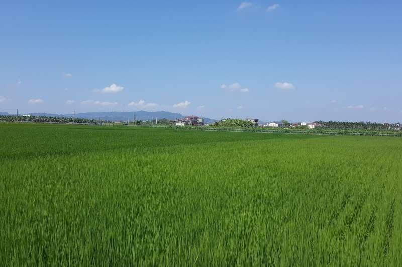 高管處採精準農業灌溉措施,不但能配合作物生長調節,還能節約用水,避免浪費。(圖/徐炳文攝)