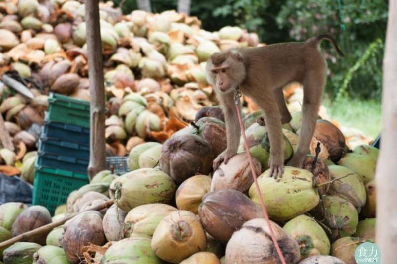 美國好市多因涉嫌壓榨猴子勞工。(圖/食力foodNEXT提供)