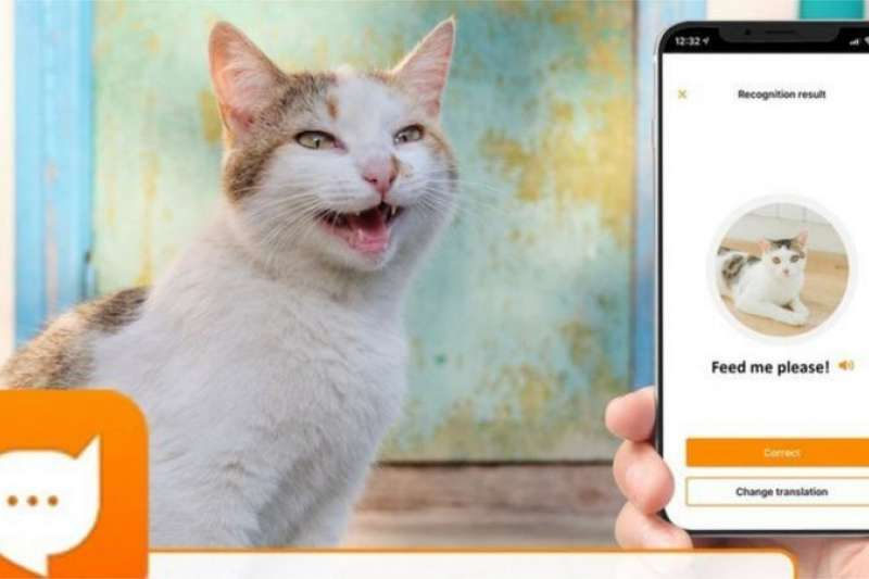 研究人員相信,每一隻貓的叫聲都是獨特而且是針對其主人發出的叫聲。(BBC News中文)