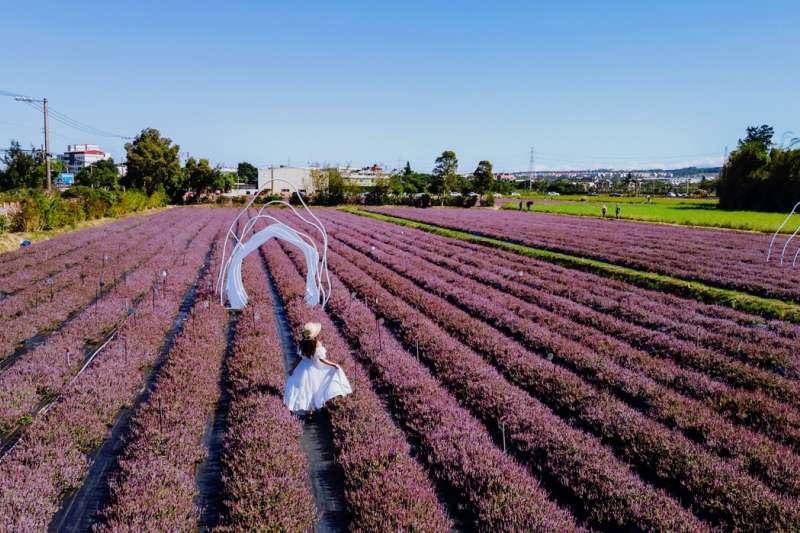 「2020桃園仙草花節」將一路綻放至12月13日,為花卉盛事再添話題。 (圖/ @molly888666提供)