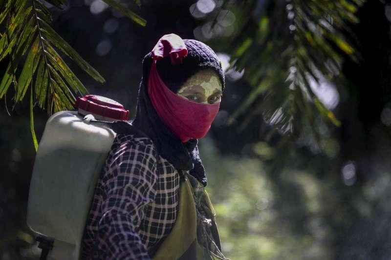 印尼與馬來西亞棕櫚油產業環境險惡,女工僅著簡單面罩噴灑農藥。(AP)