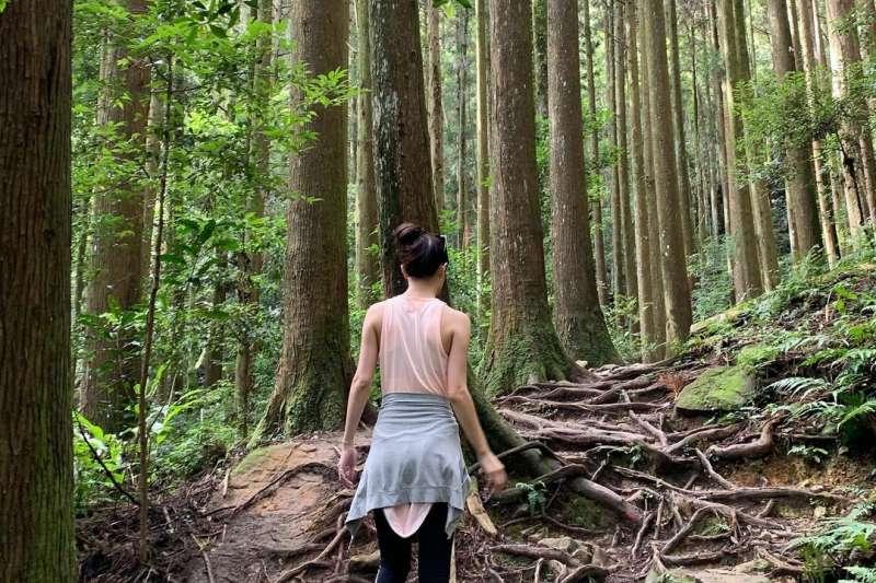 苗栗加里山步道環境。(圖/annjoycelin@instagram提供)