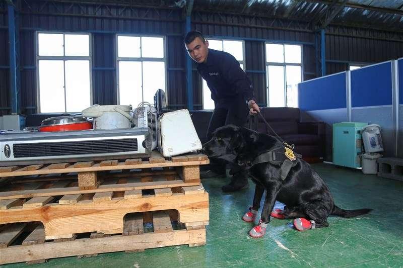 20201203-憲兵是國軍唯一仍有軍犬編制、執行特定任務的兵科。(取自青年日報社)