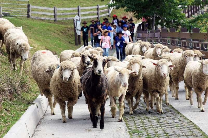 日前有民眾在國發會「公共政策網路參與平台」發起「終止清境農場綿羊秀表演」連署,訴求如能正視清境農場內的動物福利,連署達標。(取自清境農場臉書)