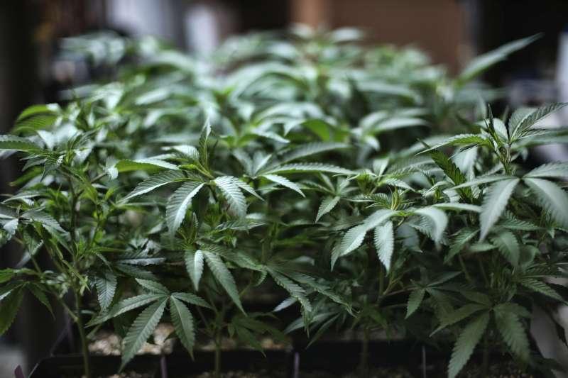 2020年12月5日,美國眾議院通過大麻合法化法案,有望在聯邦層級全面解禁。(AP)