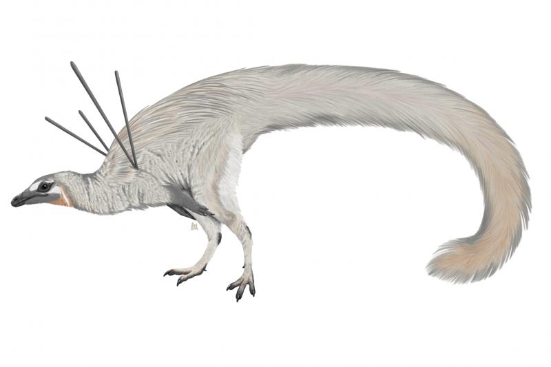 巴西鑑定出一種從未被人類發現過的新型恐龍化石(Luxquine@Wikipedia/CC BY-SA 4.0)