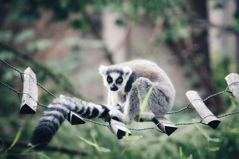 動物們的尾巴功用有這些?猴子用來吊掛身體、河馬用來佔據地盤。(圖/Unsplash)