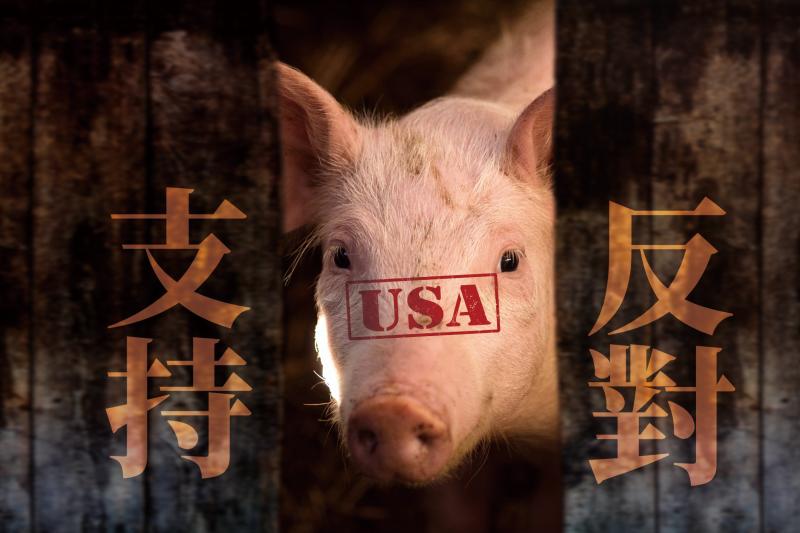 萊豬進口引爆重大爭議。(合成照)