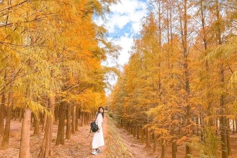 除了八德以外,桃園其實還有這些絕美的落羽松秘境。(圖/ig@her_elma23)