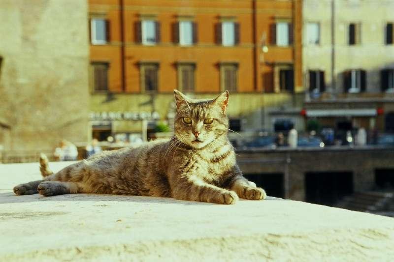 古羅馬遺跡銀塔廣場的貓咪。(Lisa Larsson@flickr)