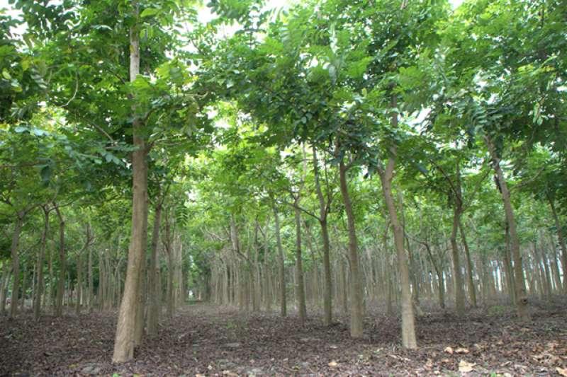 台糖重申,在農委會盤點結果未公布前,台糖不會貿然砍除造林農地執行農電共生。(圖/台糖提供)