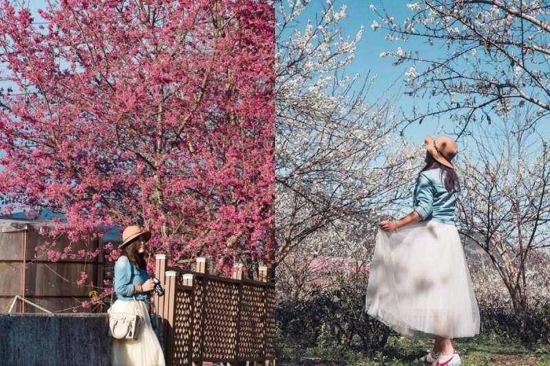 春神來了!櫻花紛紛綻放的時節緊接而至,現在就來看哪些地方是賞櫻最佳地點吧!(圖/IG @karenfaith_chiang)