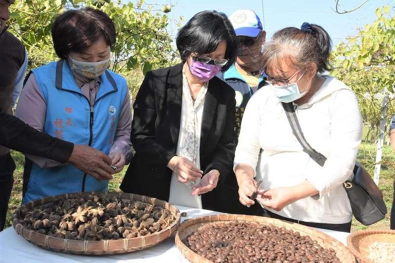 彰化縣長王惠美參訪印加果園,並理解農民對於曬乾的印加果去殼作業。(圖/彰化縣政府提供)