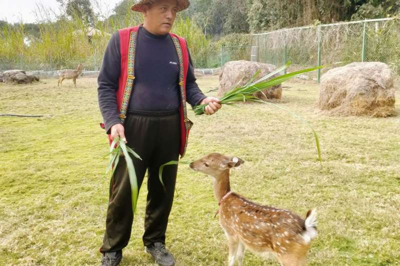 逐鹿社區於莫拉克災後興建,在春節前合法取得動物展演許可證,社區得以發展周邊觀光。(圖/業者提供)