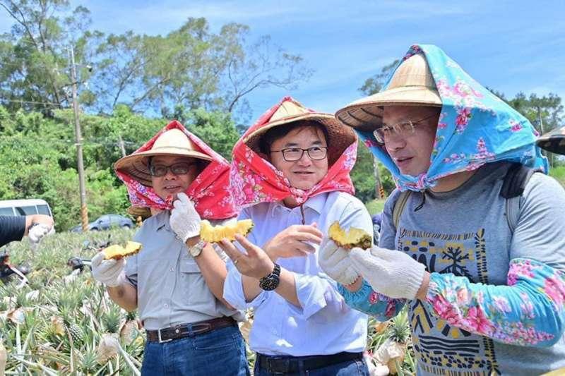 劉櫂豪(中)和林佳龍(右)去年6月到台東的鳳梨田採收新鮮的鳳梨。(交通部提供)