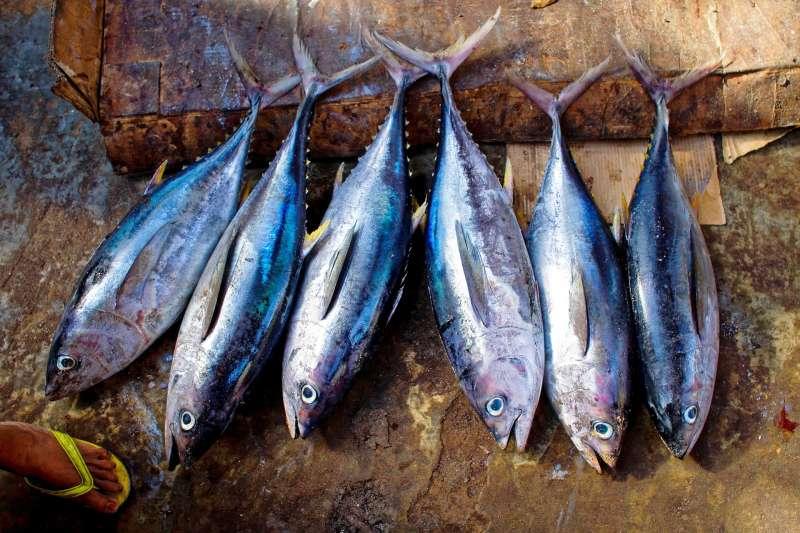 (示意圖)西太平洋、中太平洋的赤道帶,是全球最大的鮪魚漁場。(Pixabay)