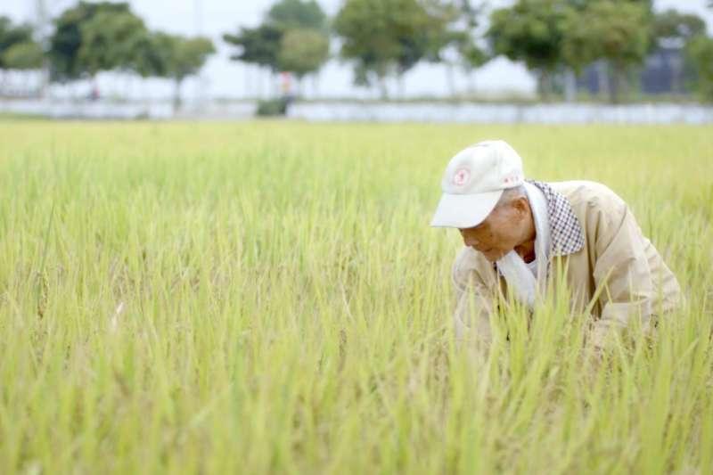 公視的紀錄片《未完成的任務:現代臺灣締造者》道出台灣的農業發展史。(圖/取自公視 時光台灣 Reel Taiwan粉專)