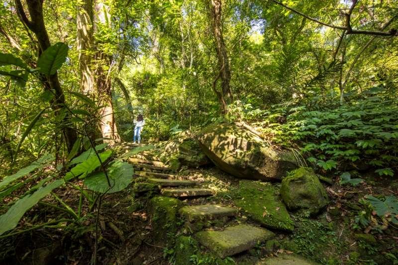 大板根森林溫泉酒店擁有豐富的低海拔熱帶雨林及優質溫泉。(圖/大板根森林溫泉酒店提供)