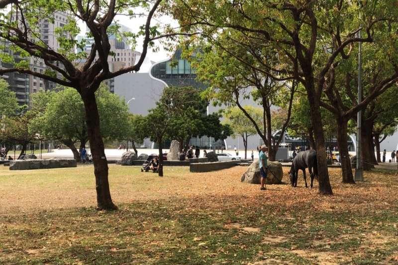 民眾在西屯區夏綠地公園溜馬,台中市府表示,馬不是寵物不得進入公園。(圖/台中市政府提供)