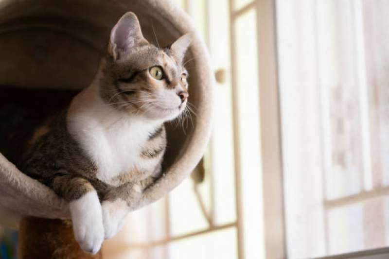 貓咪的情緒反應其實看這裡就知道了。(圖/取自pixabay)