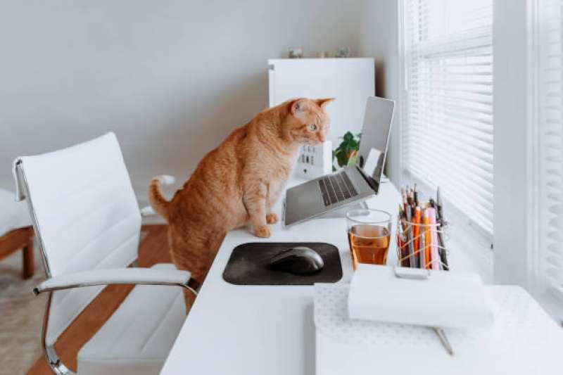 貓咪為什麼會發出「呼嚕呼嚕」聲?(圖/取自pixabay)