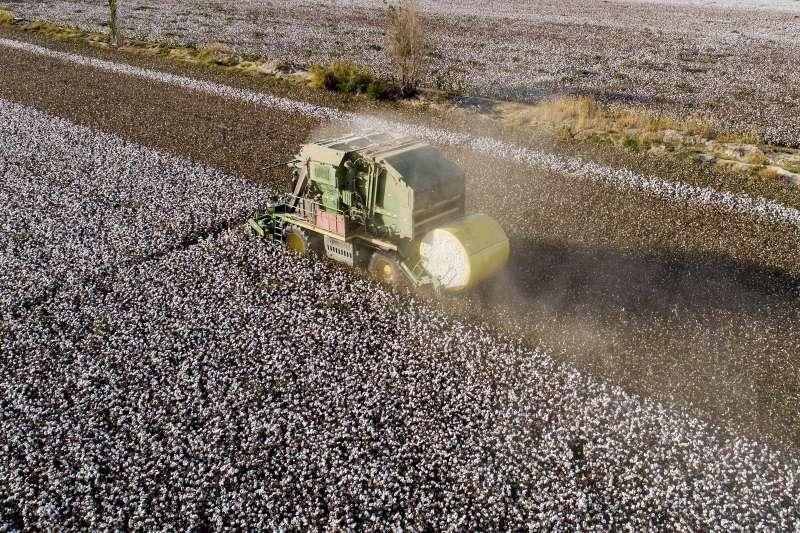 美國主導全球反中,新疆棉成為熱議題。(AP)
