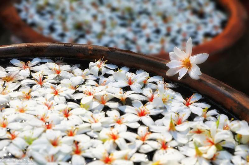 油桐花開的季節又到了!快來看看哪些景點可以看到最美的油桐花吧!(圖/estrella_chuang,Instagram)