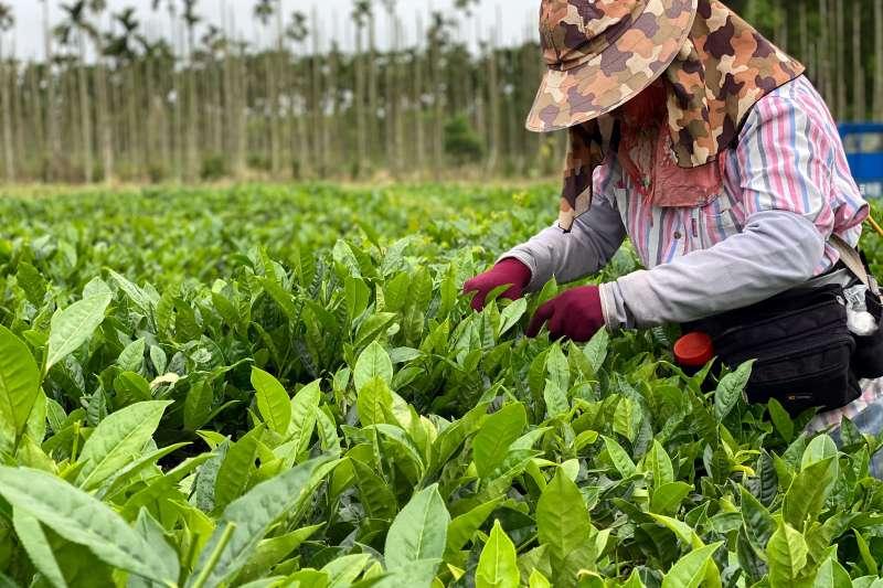 花蓮瑞穗舞鶴村擁有純淨的山水好地,得出台灣得天獨厚的好茶。(圖片提供:可口可樂公司)